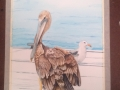 Pelican in watercolor