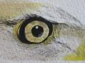 eagle-eye Pen & Ink, watercolor