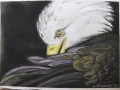 eagle in pen & ink and watercolor