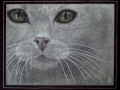 White cat - took 2nd place at Oceana Art Show 10.6.13