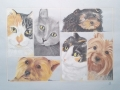 Collage of 6 pets for private owner in Ft. Lauderdale, FL